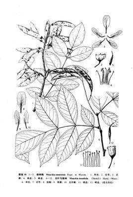 灌木树形立面图手绘