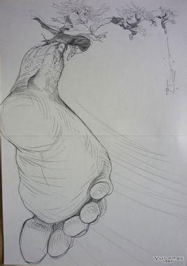 脚的结构图素描