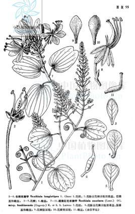 圆形植物马克笔手绘