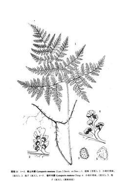 壁纸 简笔画 手绘 线稿 植物 蕨类 268_385 竖版 竖屏 手机