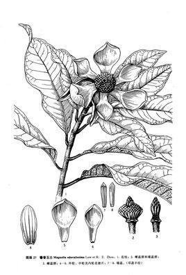 海南植物手绘线稿彩绘