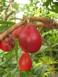 红酒金丝红梨的做法