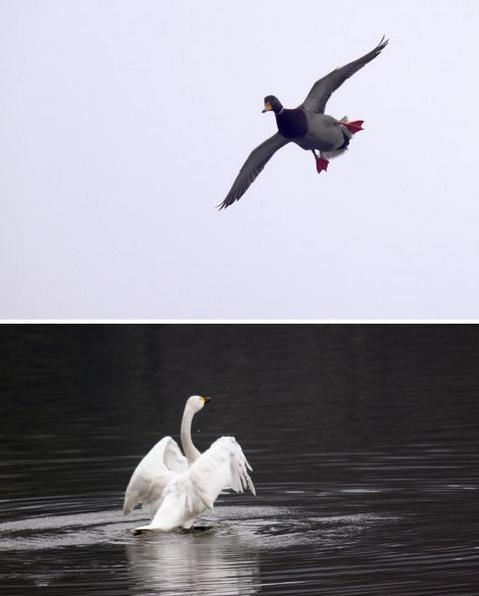 两种动物的图象彼此相邻