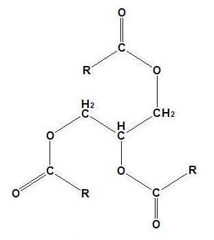 甘油三酯(triglyceride,缩写tg)是3分子长链脂肪酸和甘油形成的脂肪