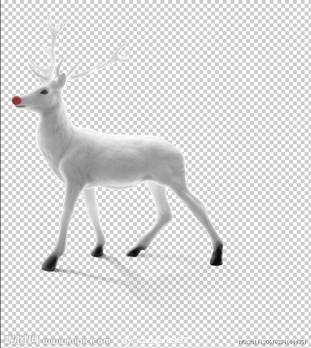 白鹿动物图片大全