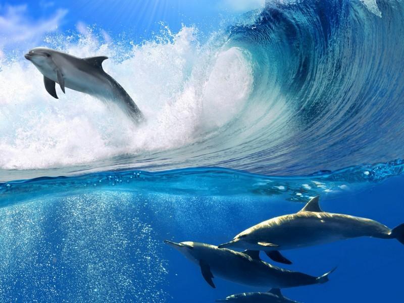 海豚相框手工制作大全