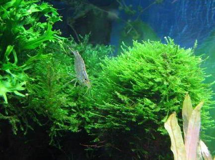 藻类植物 - 搜狗百科