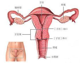患有卵巢囊肿需要做手术吗?
