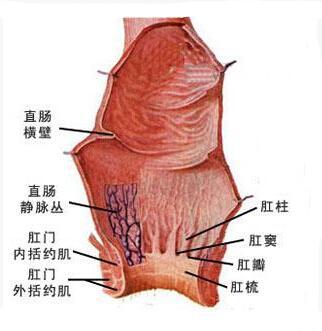 皮肤乳头状瘤红蓝铅笔手绘图