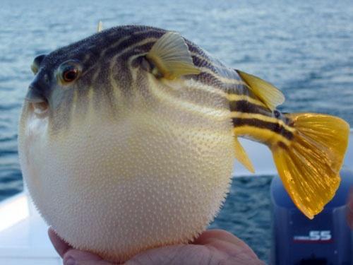 草鱼去刺的方法图解