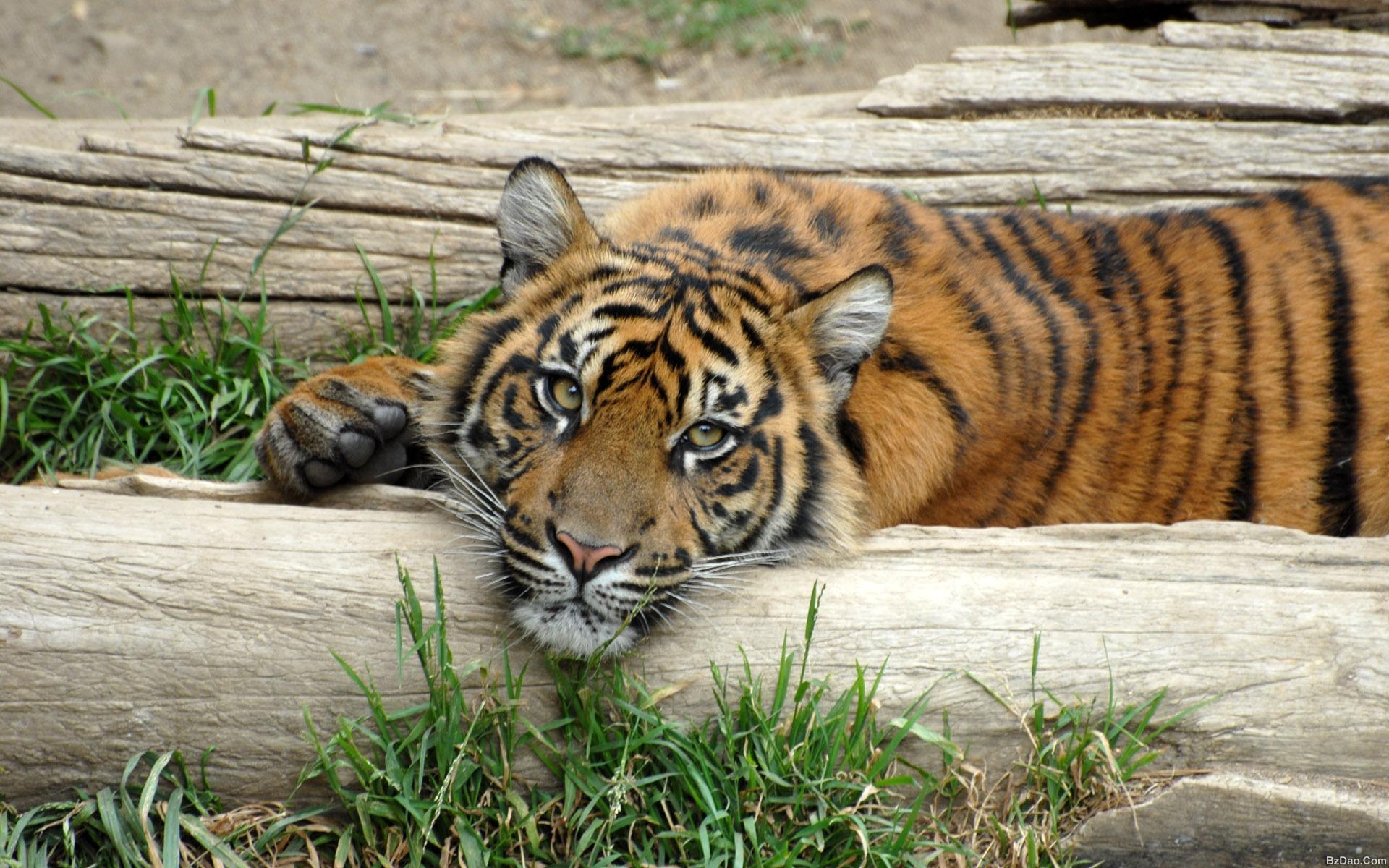国家保护动物 - �...