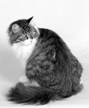 猫传染性腹膜炎 - 搜狗百科 '); // --> 新闻 网页 微信 知乎 问问