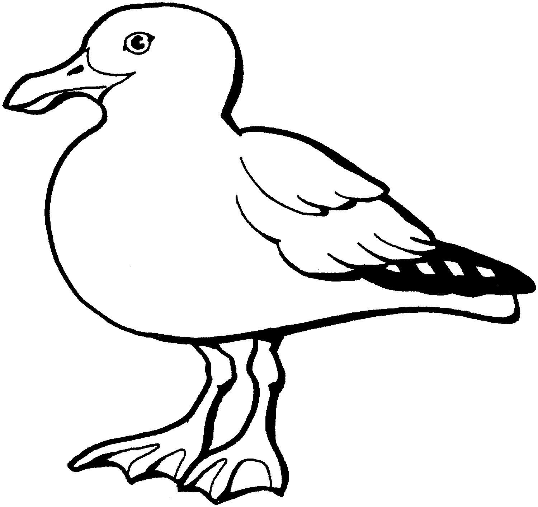 海鸥简笔画动物简笔画