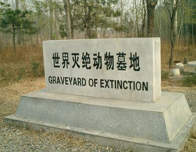 世界灭绝动物墓地