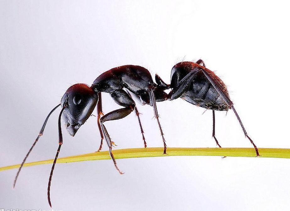 """各类生物中都有自己的""""语言"""",大多数动物是使用有声语言来传递信息的"""