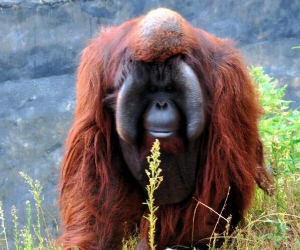 红树林里的动物