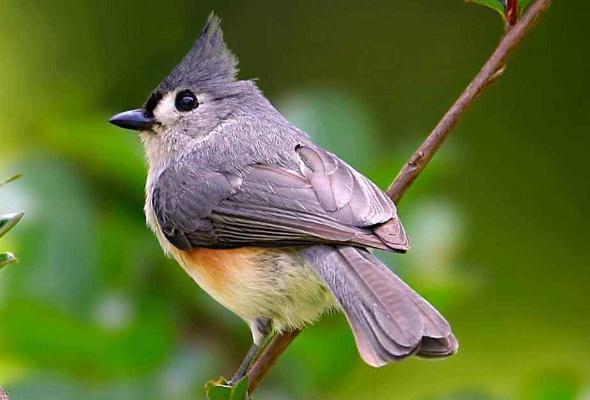 全部版本 最新版本  鸟是两足,恒温,卵生的脊椎动物,身披羽毛,前肢