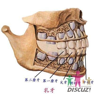 口腔内舌下结构图片
