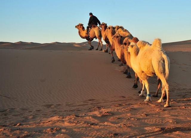 沙漠中有什么动物可以生活在沙漠里