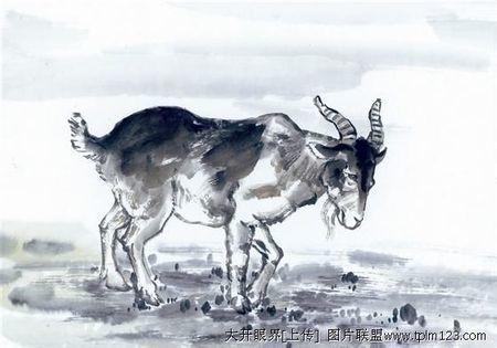 画羊的图片可爱