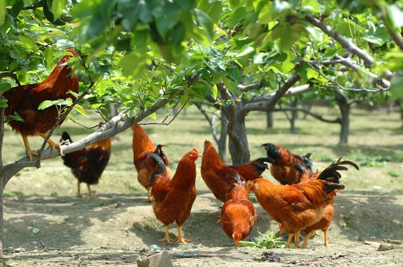 最赚钱的养殖_养殖业什么赚钱,最赚钱的养殖业