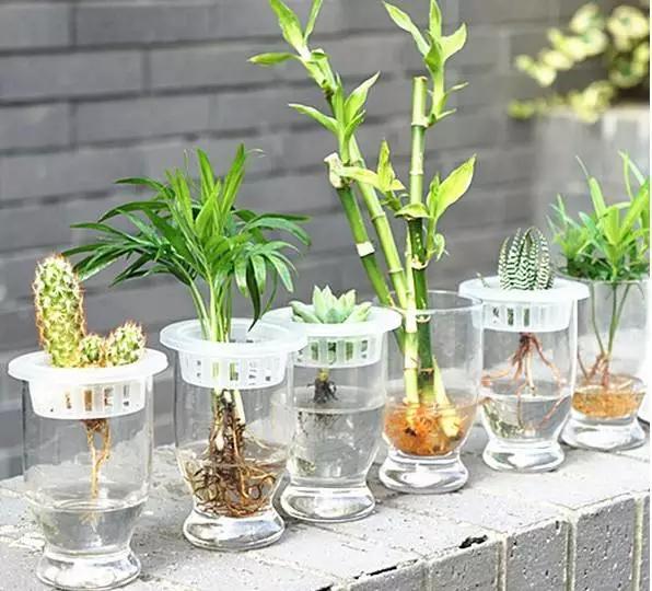 水养�:--y��yan������y��_水养植物