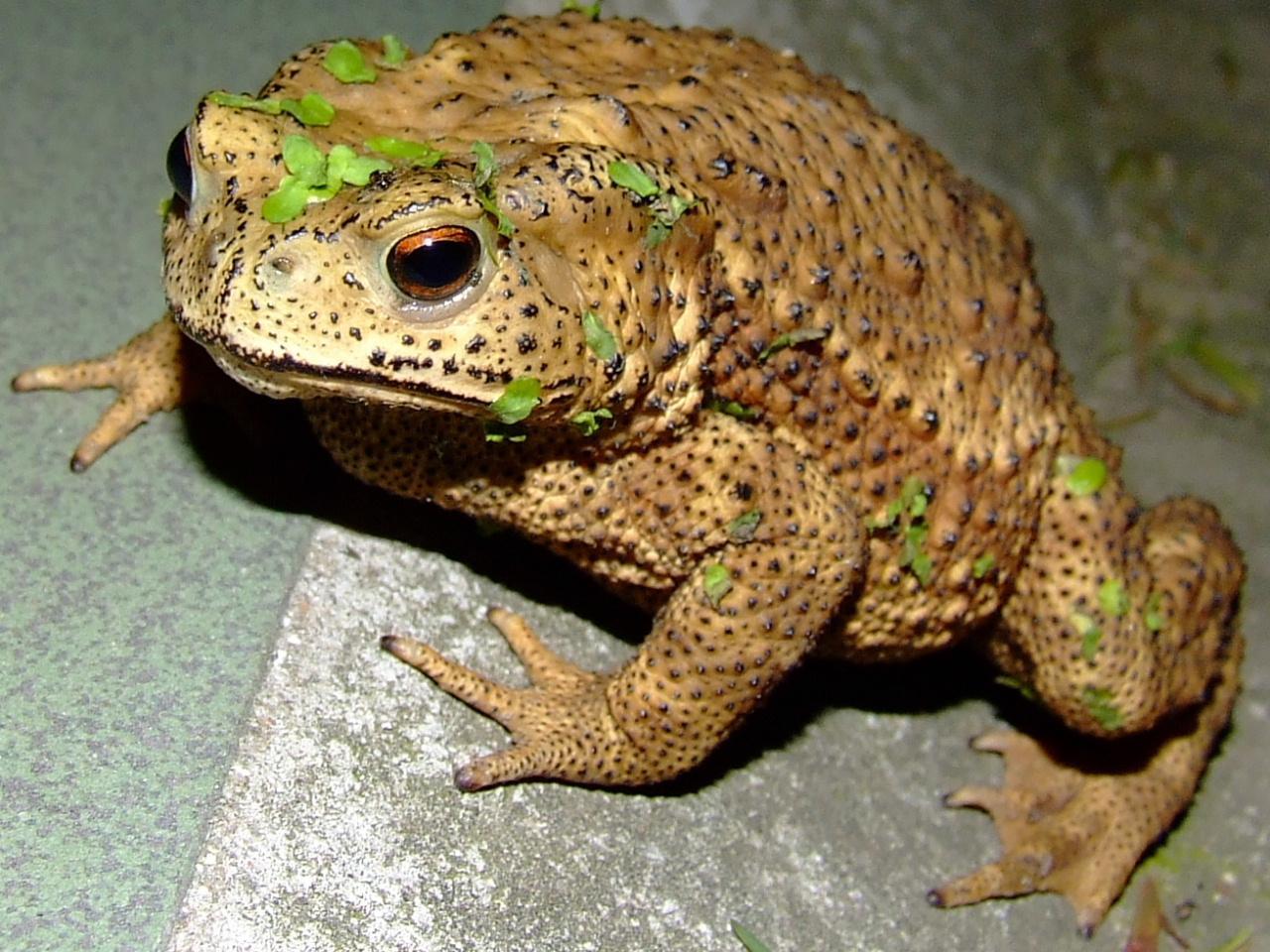 壁纸 动物 两栖 蛙 1280_960