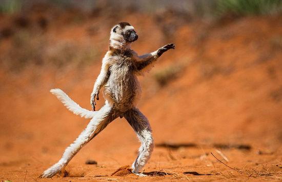 奇趣野生动物摄影大奖赛