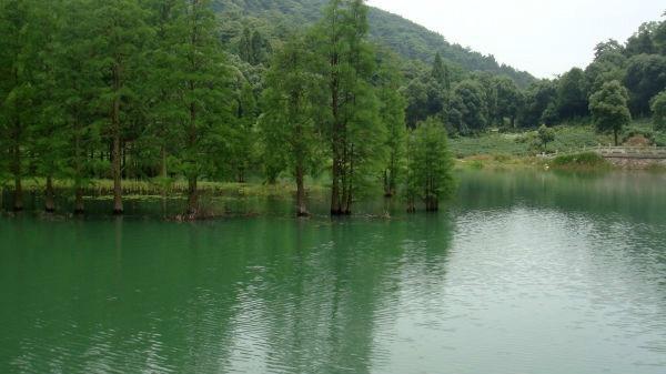摘要中文名称:九真山森林公园地理位置:湖北省武汉市蔡甸区占地死神来了手游攻略图片