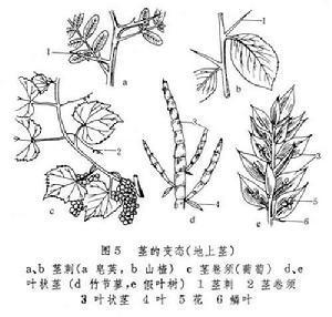 植物生长过程变化简笔画