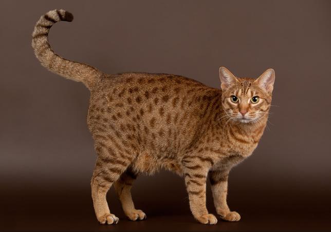 猫的身体结构图