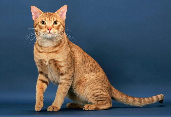猫的身体结构图清晰