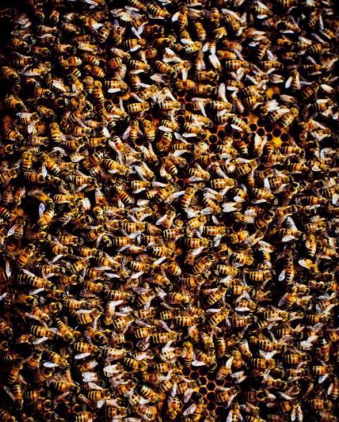 在中国古代就有对蜜蜂及其用途的记载.
