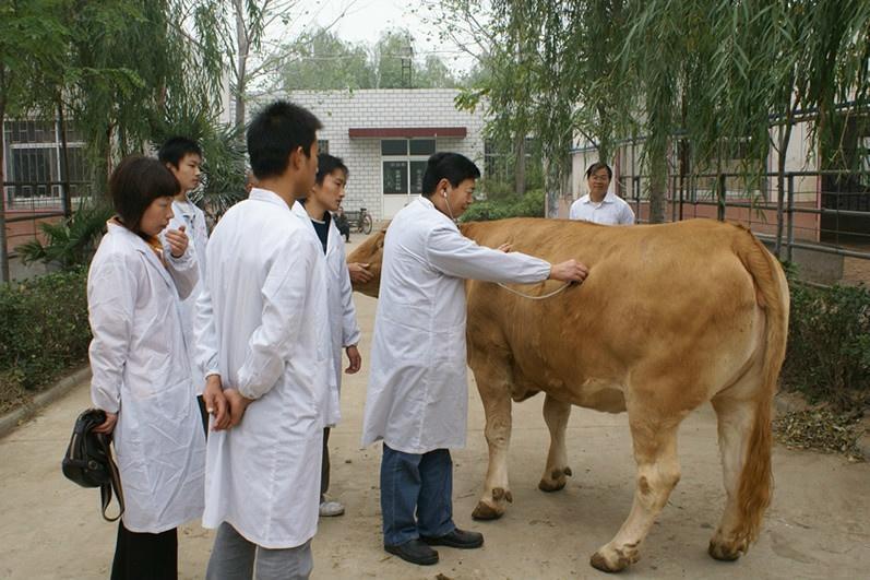 乡村兽医登记�y�-��+_乡村兽医
