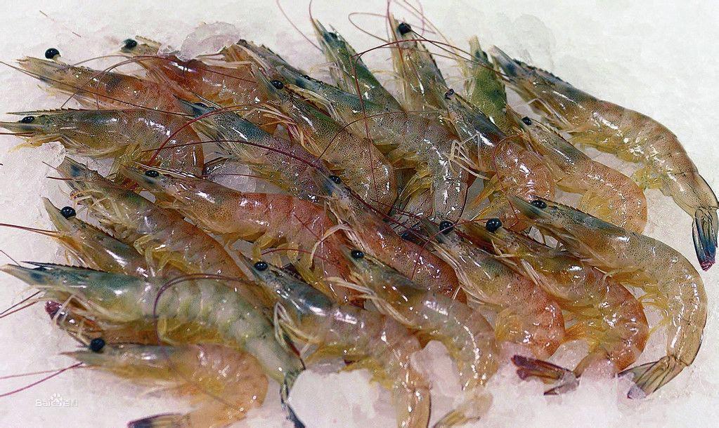 虾(甲壳类节肢动物)