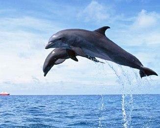 鲸身体结构