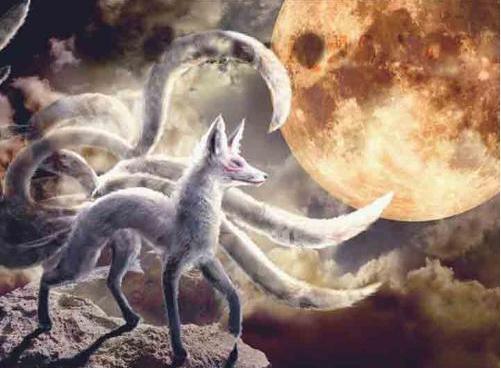 九尾狐和玄狐,白狐等最先出现在原始宗教的图腾信仰中.