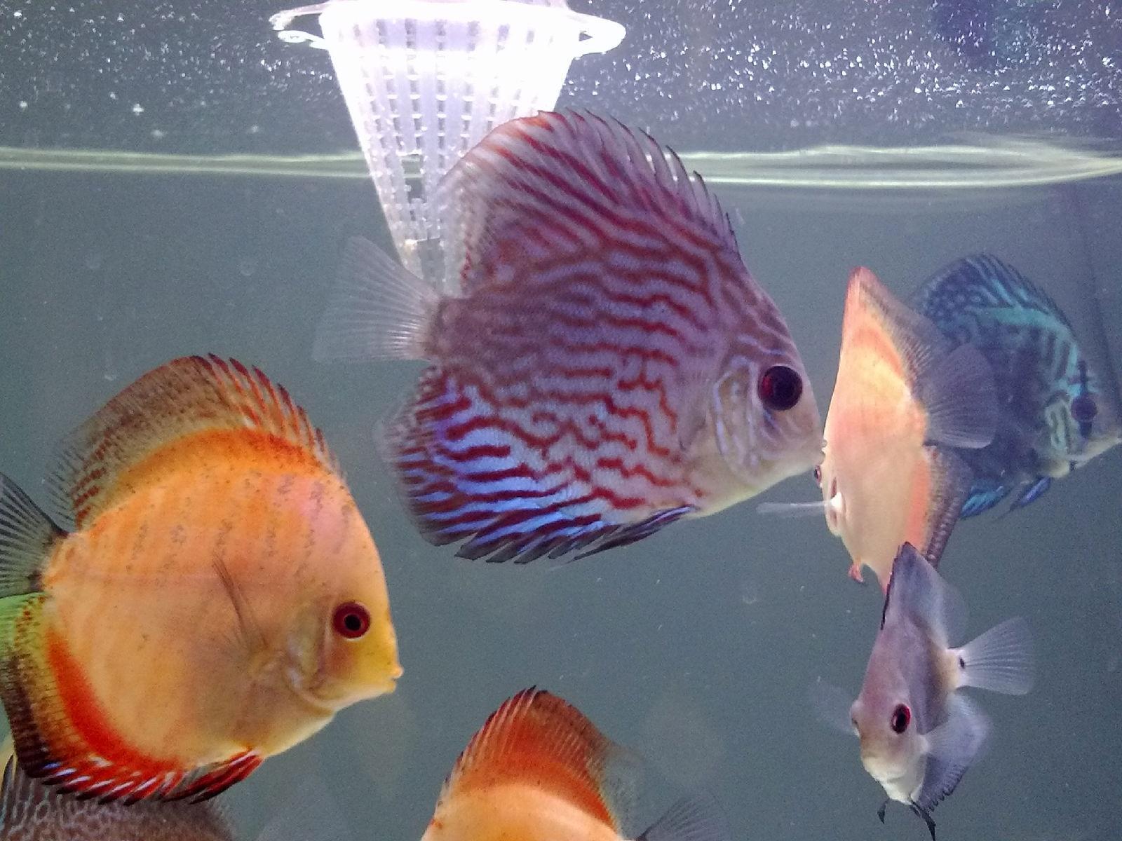 饲养高鳍红箭的鱼友欢迎一起交流 - 小组讨论 - 豆瓣