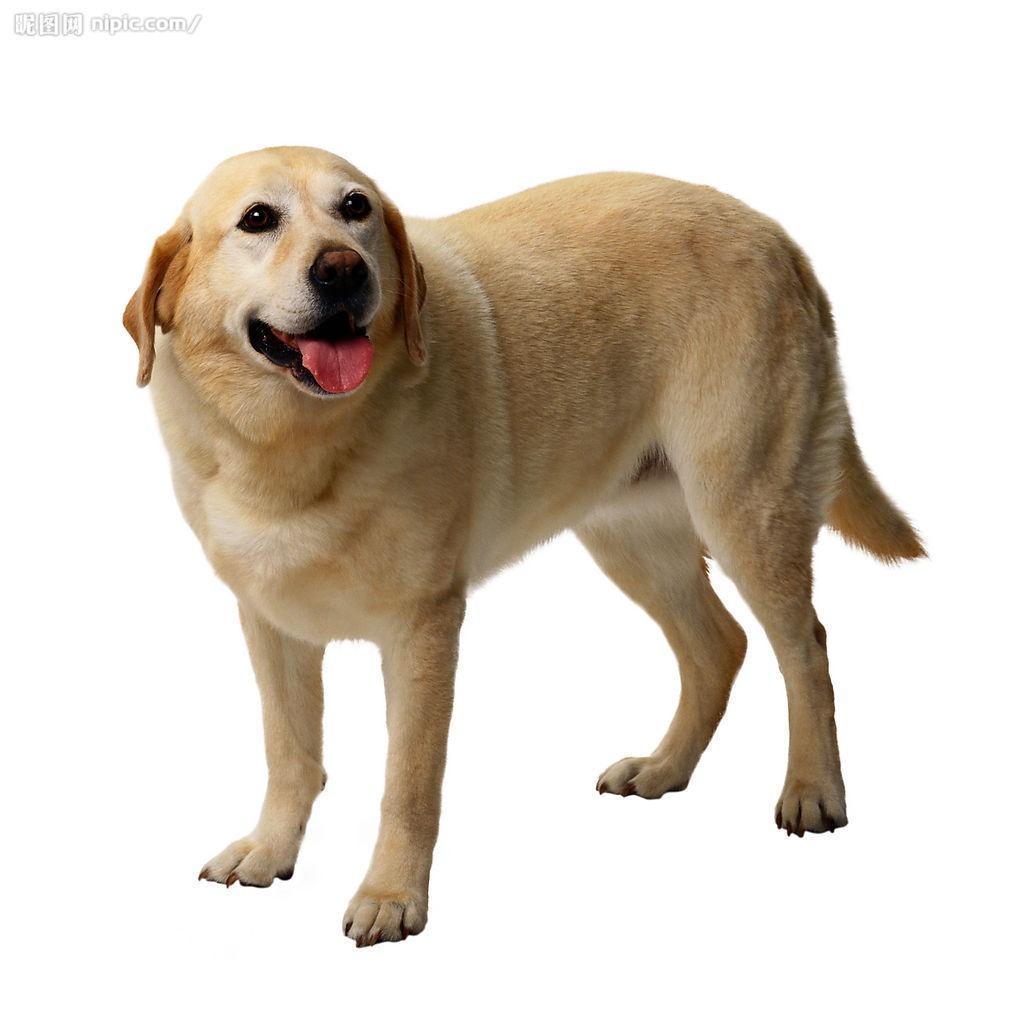 狗图片大全可爱图片