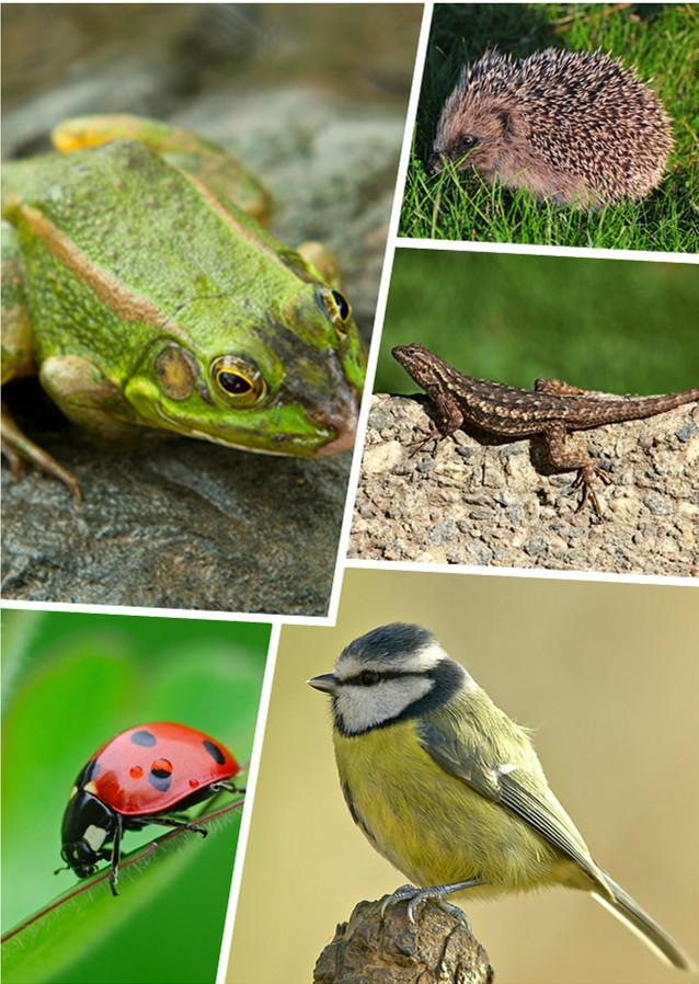 三有保护动物,即国家保护的