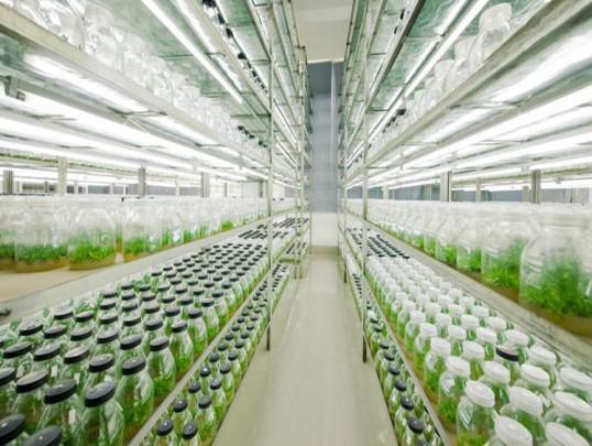 利用植物体离体的器官如根,茎,叶,茎尖,花,果实等)组织(如形成层,表皮