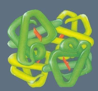 蛋白质四聚体(四级结构)