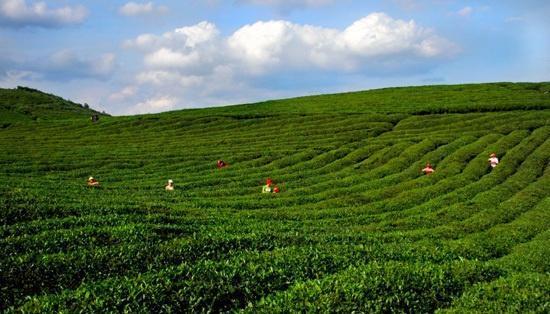 格林镇位于正安县城东部约13公里处,303省道和芙蓉江横贯全境.图片