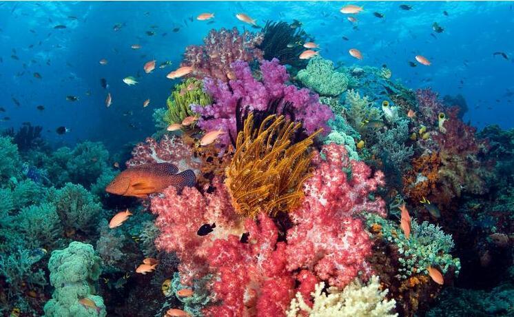 在深海和浅海中均有珊瑚礁存在.