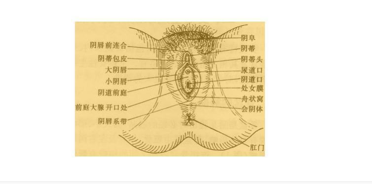 女裸体阴门艺术_阴门