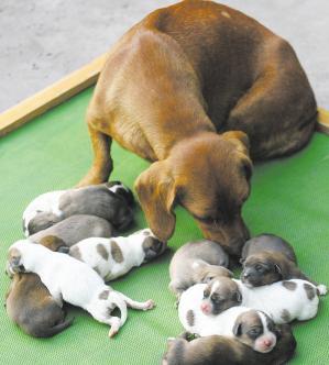 胎生动物的受精卵一般很小,在母体的输卵管上端完成受精,然后发育成