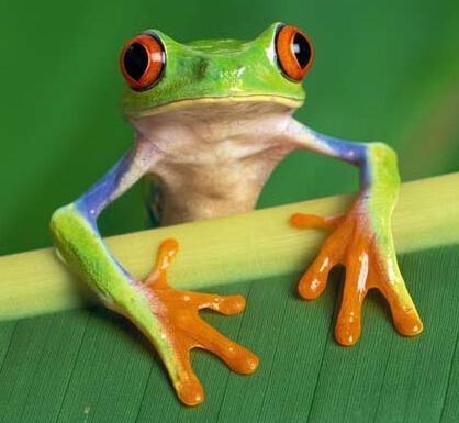 高清工笔画树蛙大全