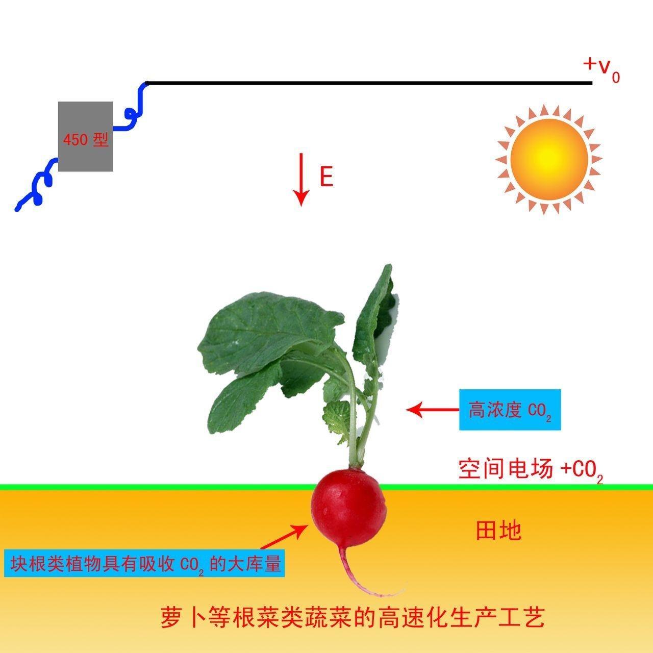 光合作用过程图