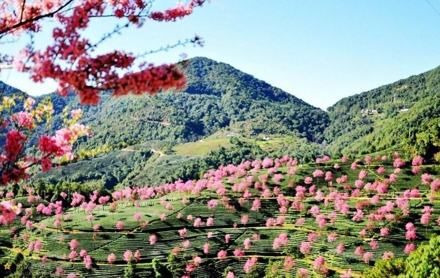 樱花谷一般都免费为游客开放,不收费,景区一般配备有观景台,卫生间,餐