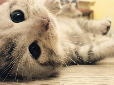 壁纸 动物 猫 猫咪 小猫 桌面 400_300